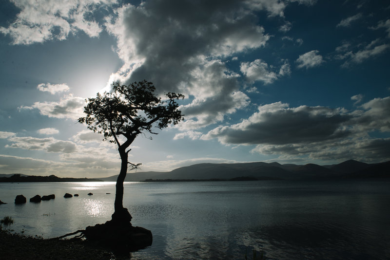 tree-against-evening-light-sky-shoreline-loch.jpg
